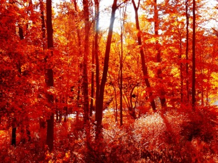 Fall Forest Leaves