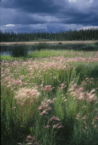 Summer Storm Over Meadow